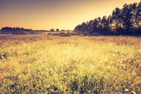 Vintage photo of summer meadow at morning, european landscape.