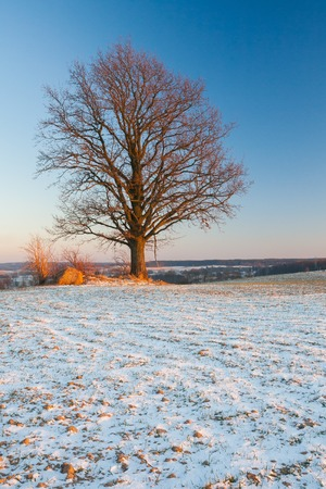 Beautiful winter field landscape. European fields at snowy winter and sunny day.