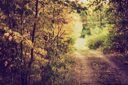 road autumnal: Beautiful autumnal landscape with sandy road in forest. Photo with vintage mood effect Stock Photo
