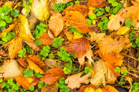 Background of orange and yellow autumnal leaves lying on ground. Autumn concept backdrop. Stock Photo
