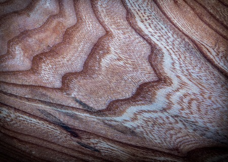 Old wooden texture. Destroyed wood background with texture in close up.