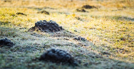 molehill: Molehill in garden photographed at cold day. Stock Photo