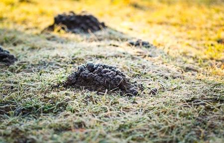 molehill: Molehill in garden photographed at cold day. Stock Photo