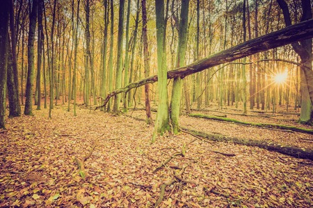 Autumnal forest landscape with vintage mood filter. Fall forest in vintage colors.