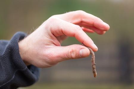 lombriz de tierra: Mano del hombre con la lombriz de tierra. lombriz de tierra de la mano humana tomada de suelo.