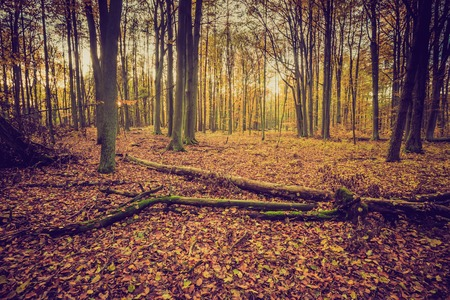 lomography: Autumnal forest landscape with vintage mood filter. Fall forest in vintage colors.