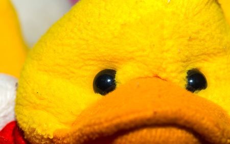 baby facial expressions: Close up of toy eye. Piece of cuddly toy face in big close up. Stock Photo