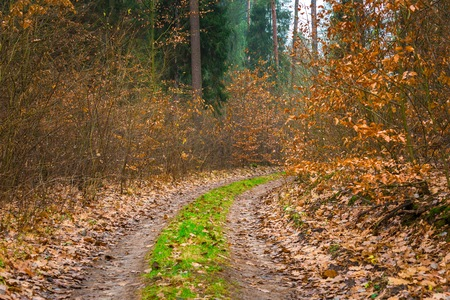 climatic: Fall forest with beautiful colors and sandy road. Climatic autumn landscape.