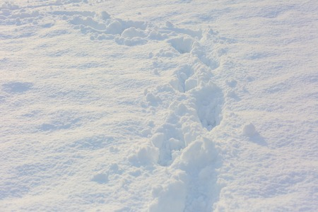 dint: Footsteps in snow. Close up of footmarks in fresh snow. Stock Photo