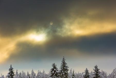 Schließen Sie herauf Sonne und Waldbaumniederlassungen am Tag des verschneiten Winters. Abstrakte Landschaft