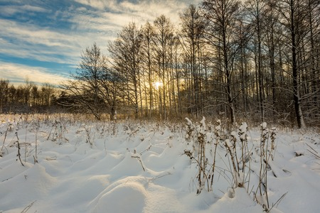 covered fields: Beautiful winter field and trees landscape. Snow covered polish landscape.