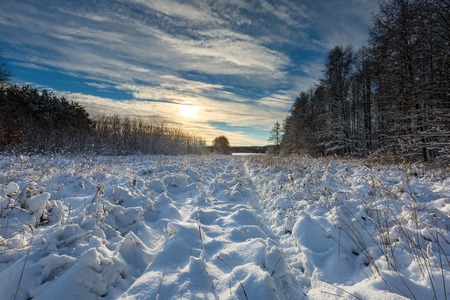 winter field: Beautiful winter field and trees landscape. Snow covered polish landscape.