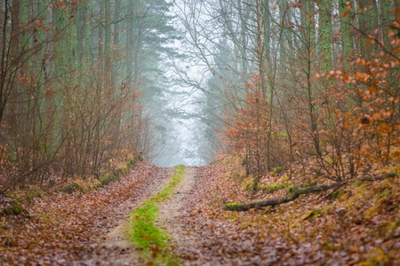 Fall forest with beautiful colors and sandy road. Climatic autumn landscape.