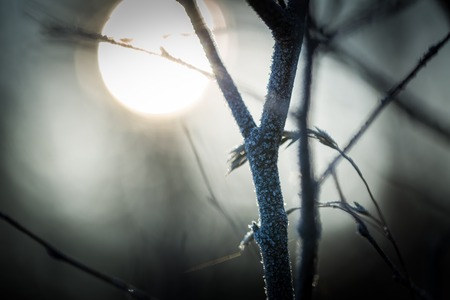Close up of withered tree twig with rime. Hoarfrost on tree branch. Abstract background Stock Photo