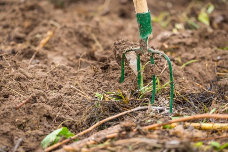 Fork in garden. Fork nailed in garden soil, close up of gardener tool Stock Photo