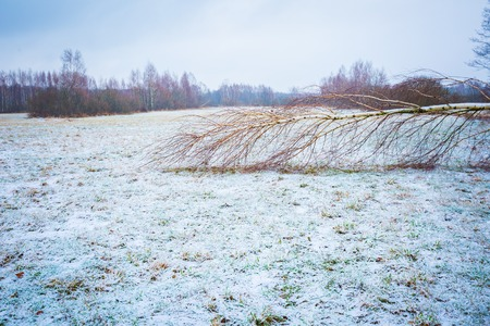 Bad weather winter meadow landscape. Winter meadow with first snow.