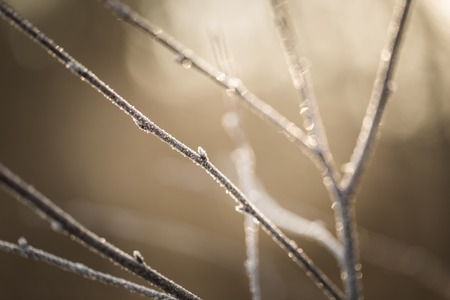 winterday: Close up of withered tree twig with rime. Hoarfrost on tree branch. Abstract background Stock Photo