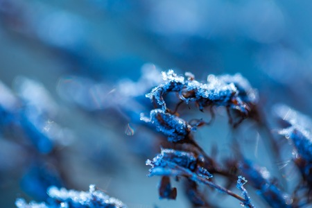 snowy field: Ice structure on plants. Plants with rime in close up. Natural winter background.
