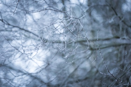winterday: Tree twig with rime. Soothing colors and tones abstract photo of winter tree branch.