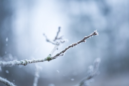 snowscene: Tree twig with rime. Soothing colors and tones abstract photo of winter tree branch.
