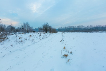 snowy field: Winter sunrise on meadows. Polish typical winter rural landscape. Calm day beginning. Stock Photo