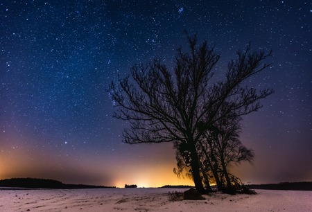 Milky way and starry sky over winter landscape and trees. Night sky astrophotography background.