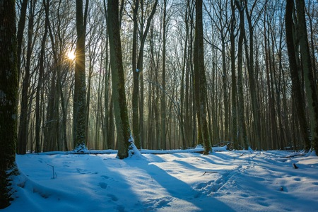 masuria: Winter woods in Poland. Landscape with good weather in forest. Polish countryside.