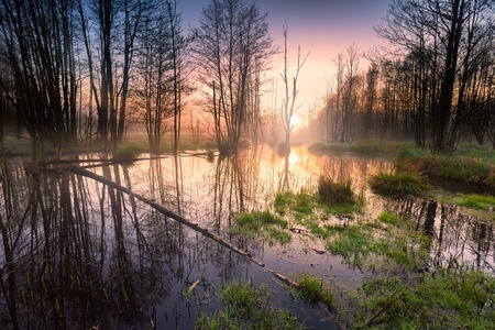 Sunrise over wetlands. Beautiful scene of foggy morning and sunrise over waters of wetlands. Stock Photo
