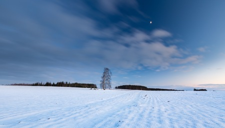 Beautiful winter field landscape with lonely birch tree. After sunset colorful long exposure landscape.