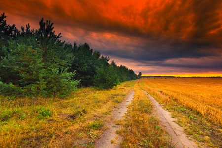 Colorful, magical sunset over sandy rural road , forest and stubble field