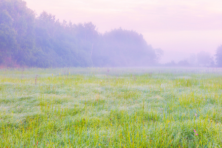 Vibrant landscape with foggy meadow in Poland. Countryside with wild foggy meadow.