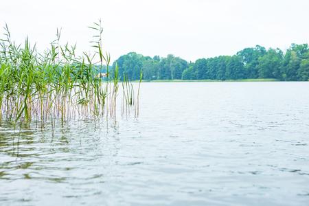 Polish lake landscape. Bad weather and lake shore with reeds. Stock Photo