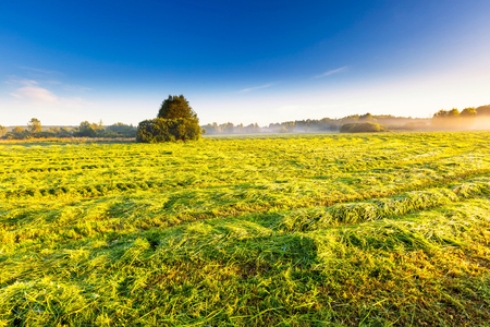 cutted: Morning foggy meadow landscape in polish countryside. Polish morning landscape.  Stock Photo