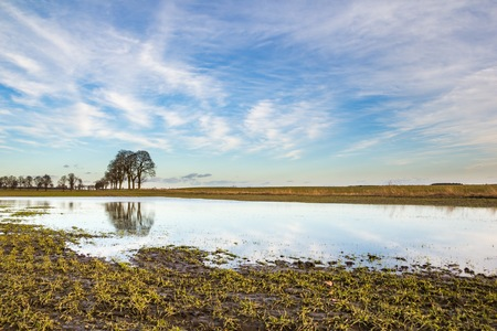 Young cereal growing on flooded field in Poland. Natural early spring landscape.