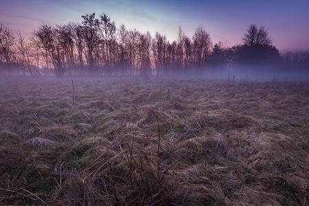 Early spring foggy meadow at sunrise. Beautiful polish landscape.