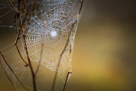 Spider web with dew droplets in big close up. Cobweb macro photographed at morning.