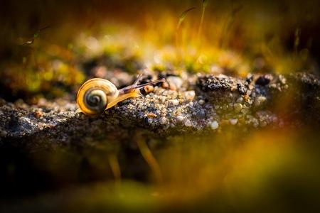 gastropod: Macro of small snail crawling in blooming moss. Animal macro. Stock Photo