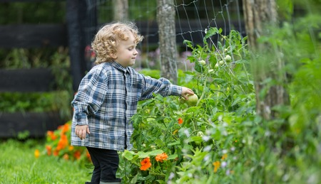 Young boy with curly hair playing outdoor. Healthy lifestyle. Boy take care of plants in garden. Stock Photo