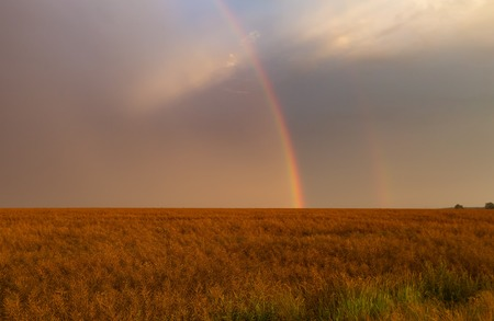 Beautiful rainbow over fields. Natural landscape with rainbow. Stock Photo
