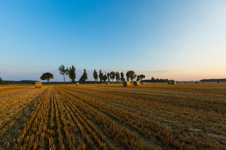 Summer landscape with stubble field and rolled bales of straw. Stock Photo