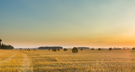 Summer landscape with stubble field and rolled bales of straw. Standard-Bild - 90337193