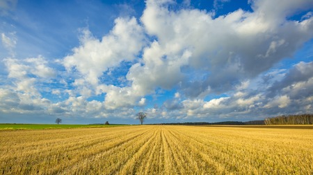 Stubble field landscape under cloudy sky. Beautiful polish landscape. Stock Photo