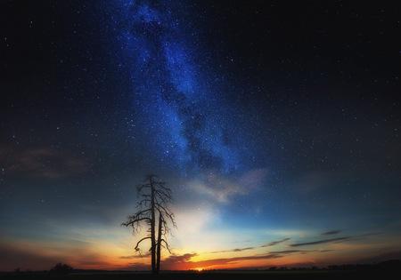 Starry sky over field and dead tree, fine art landscape. Dreamy landscape