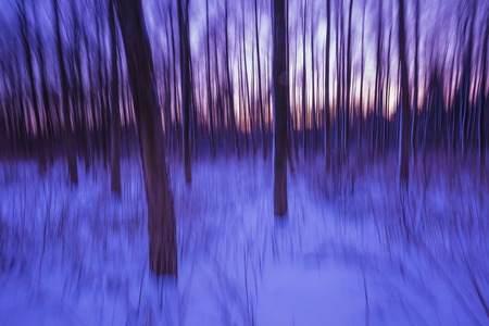 Abstract forest photographed on long exposure. Beautiful fineart landscape.