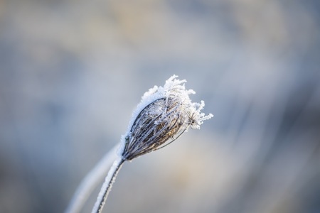 Close up of plants with frost. Natural macro background. Zdjęcie Seryjne