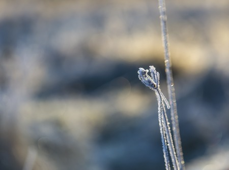 Close up of plants with frost. Natural macro background. Stock Photo