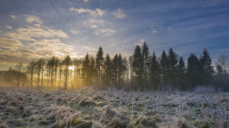 Winter morning with frosted plants. Beautiful polish countryside in winter.