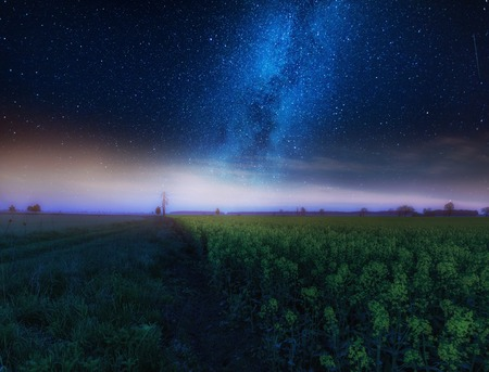 Nigh landscape with starry sky over field of blooming rape seed. Calm night landscape Zdjęcie Seryjne