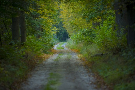 Sandy road in a early autumn forest. Polish landscape.