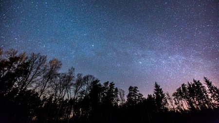Night starry sky with milky way over forest in springtime.